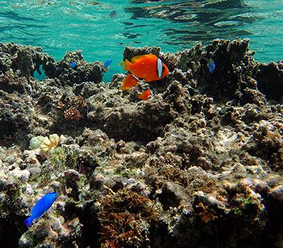 珊瑚のや魚がたくさんいる海